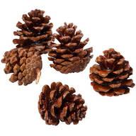 Starter Pinecones Refill