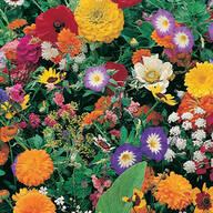 Garden Fragrance Garden Roll Out Flowers
