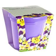 Viola Seed Starter Kit