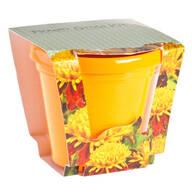 Marigold Seed Starter Kit