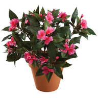 Impatiens Bush by OakRidge™