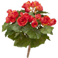 Begonia Bush by OakRidge™
