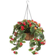 Full Assembled Begonia Hanging Basket by OakRidge™