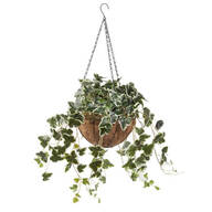 Fully Assembled Ivy Hanging Basket by OakRidge™
