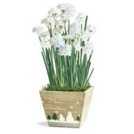 Paperwhites Gift Basket