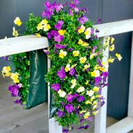 Bag O'Blooms® Shade Loving Pansy Saddle Bag