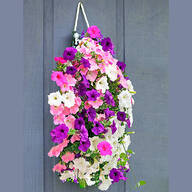 Bag O'Blooms® Sun Loving Petunias