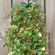 Organic Hanging Cherry Tomato Garden Kit