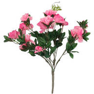 Azalea Bush by OakRidge™