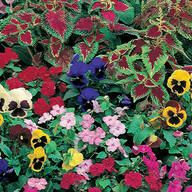 Shady Garden Garden Roll Out Flowers