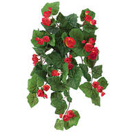Begonia Hanging Stem by OakRidge™