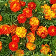 """Flower Mat, Merry Marigolds 17""""x5'"""