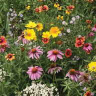Honeybee Garden Flower Mat
