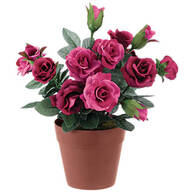 Mini Potted Rose by OakRidge™
