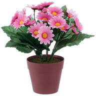 Mini Potted Daisy by OakRidge™