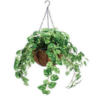 Fully Assembled Pothos Basket by OakRidge™
