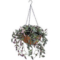 Fully Assembled Wandering Jew Basket by OakRidge™