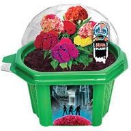 Zombie Brains Micro Dome Terrarium